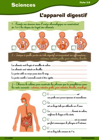 Download Tous les muscles du corps humain pdf