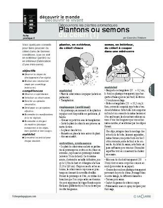 plantes aromatiques 2 plantons ou semons du c leri fichesp. Black Bedroom Furniture Sets. Home Design Ideas